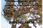 <strong>2014.10.18. &#8211; Raganas priede, Jaunsaules teātra izrāde</strong>